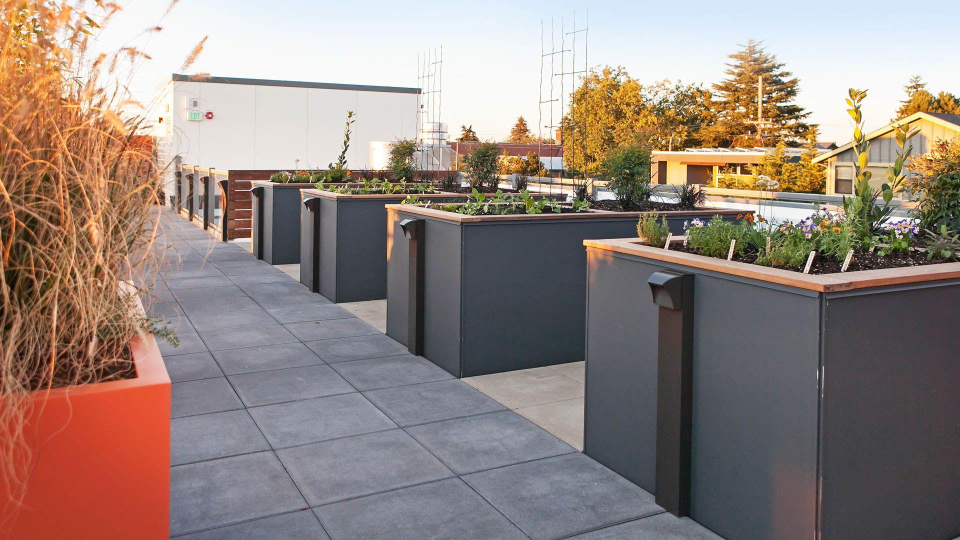 Springline Apartments - Rooftop Garden